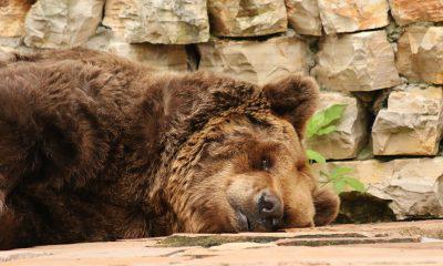 Ethereum [ETH], Litecoin [LTC], Cardano [ADA] - Will the bears run them down? - Sentiment Analysis - March 29