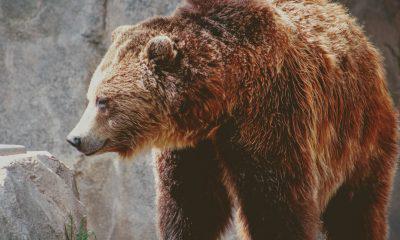 Ripple [XRP] continues bearish run
