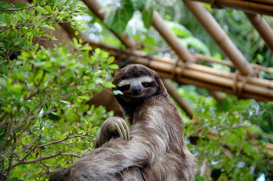 Ripple, Verge and TRON - sloth like growth - Sentiment Analysis
