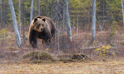 EOS [EOS], Cardano [ADA] and Bitcoin Cash [BCH] bleed as bears strike again