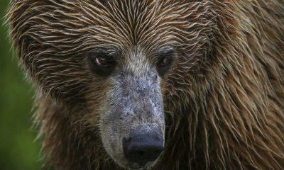 Litecoin [LTC/USD] Technical Analysis: The coin stuck underneath the bear's claws
