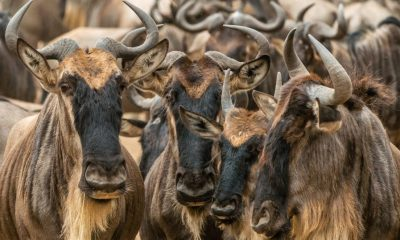 """Bitcoin [BTC] will start to see the """"proverbial herd"""" of institutions turning towards it, states hedge fund CEO"""