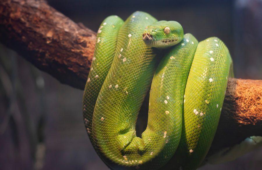 "Monero [XMR]s lead developer states TokenPay are ""snake oil salesmen"""
