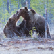 Cardano [ADA/USD] Technical Analysis: Grizzly attack resumes after short bull run