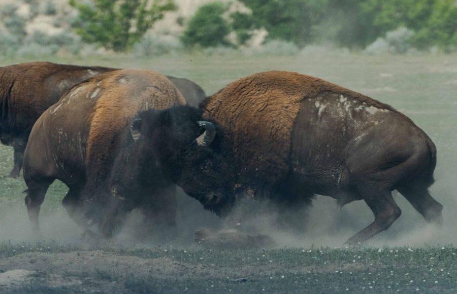 Tron [TRX/USD] Technical Analysis: Bull run to take place soon