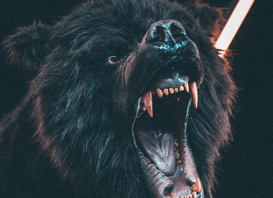 XRP/USD Technical Analysis: Bear's growl scares bulls away