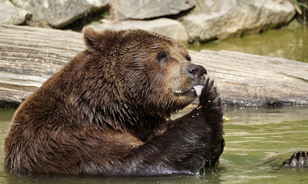 Bitcoin Cash [BCH] Technical Analysis: Bear feeding on the ravaged coin thumbnail