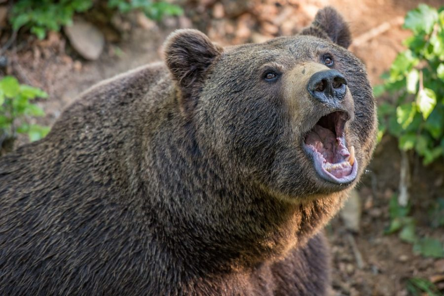 Cardano [ADA] Technical Analysis: Bear attack imminent after brief respite
