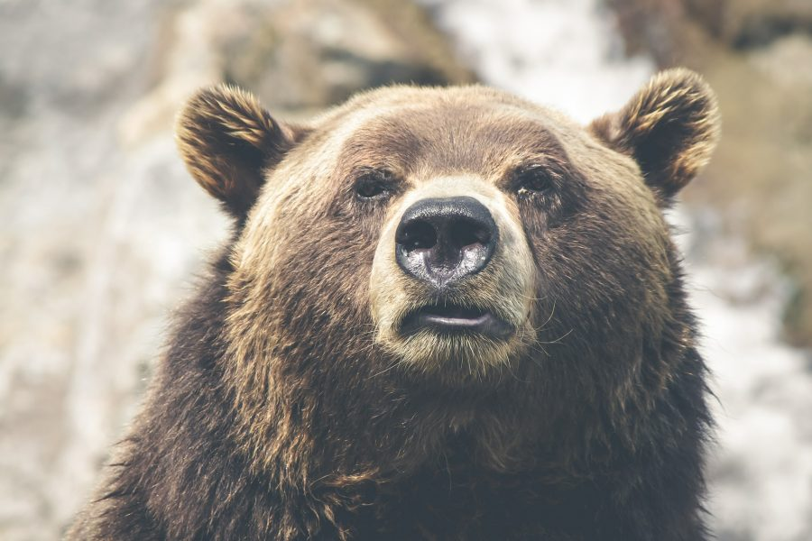Bitcoin [BTC/USD] Technical Analysis: Bears infest the world's largest cryptocurrency again