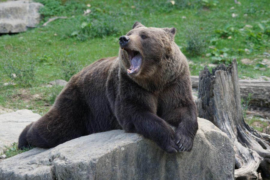 Litecoin [LTC] Technical Analysis: Bears retain the upper hand as bulls offer weak resistance