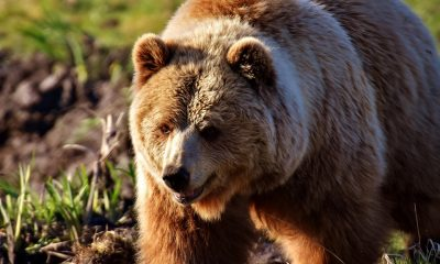 Litecoin [LTC] Technical Analysis: Bears dominate as Litecoin bleeds over the weekend