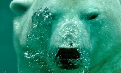 Bitcoin SV [BSV] Technical Analysis: Bears looking to maul BSV
