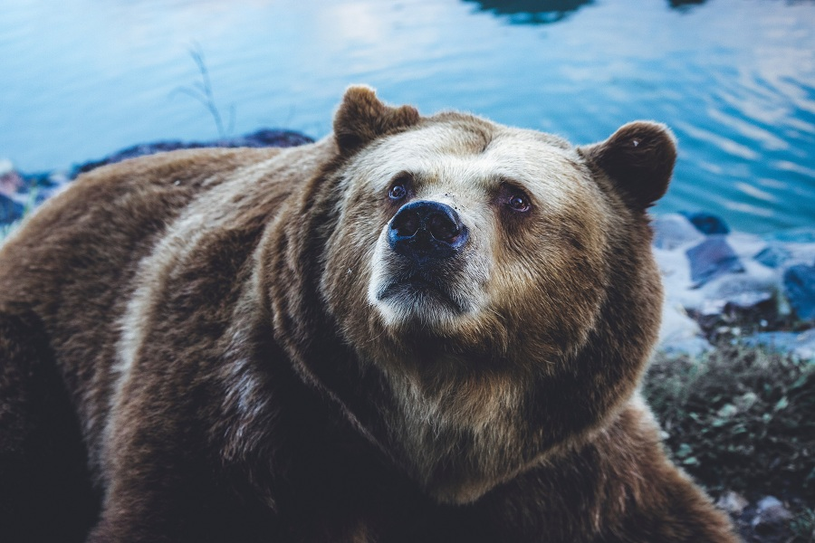 XRP/USD Technical Analysis: Bears take over as bulls find no respite