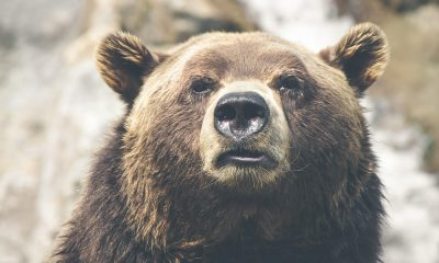 Tron [TRX/USD] Technical Analysis: Cryptocurrency succumbs to the bear again as prices stagnate