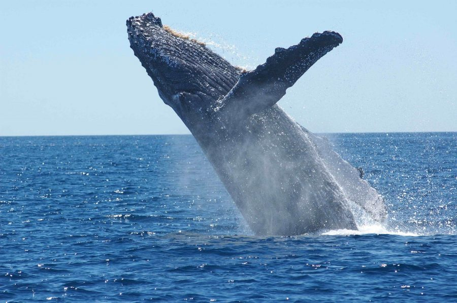 Bitcoin [BTC] whales are more active this year than the last quarter of 2018, says report