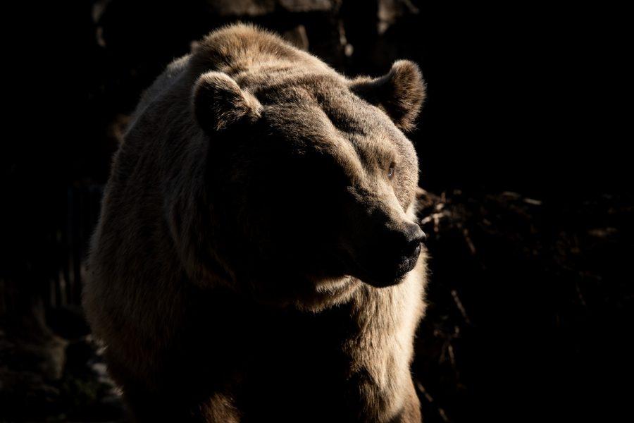 Cardano [ADA] Price Analysis: token's future lurking in bear zone