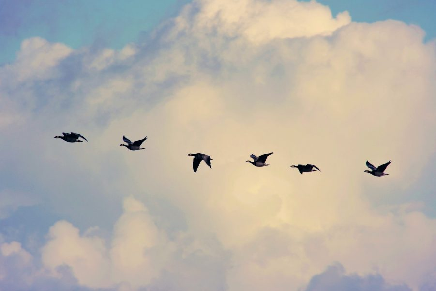 Bitcoin's [BTC] dump may have triggered migration of BTCs worth hundreds of millions